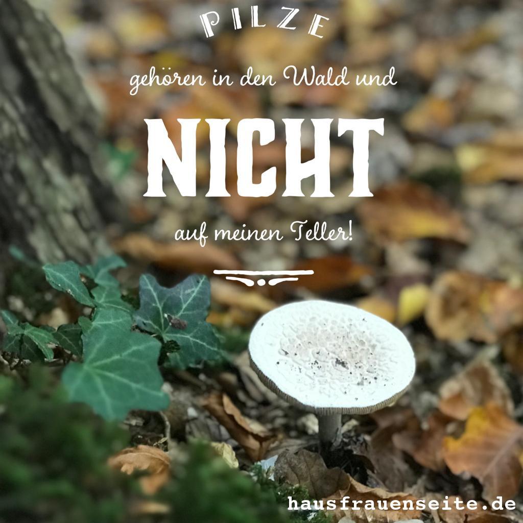 Pilze Gehören In Den Wald